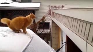 видео приколы про животных в хорошем качестве