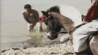 Cười Vỡ Bụng Khi xem Phim Hài Việt Nam Xưa Hay Nhất - Hài Tết Kinh Điển