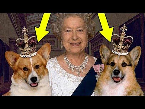 Любимые породы собак царских семей