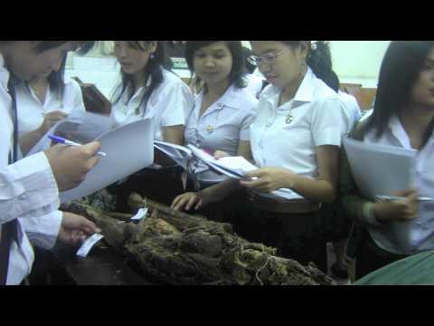 แนะนำแพทย์แผนไทยประยุกต์ มหาวิทยาลัยราชภัฎสวนสุนันทา2