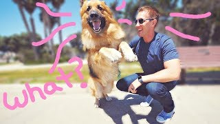 Homeless German Shepherd Dog Screams Like a Person When He Sees Ocean First Time! (Amazing Reaction)