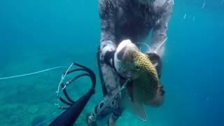 Download Video Best Spearfishing Spot at Tidore Island, North Maluku, Indonesia. (Akesahu Spot) MP3 3GP MP4