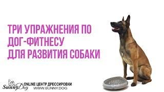 Урок 2. Три полезных упражнения по дог-фитнесу для развития собаки