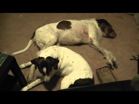 Dog Continuously Kicking Other Dog In Sleep