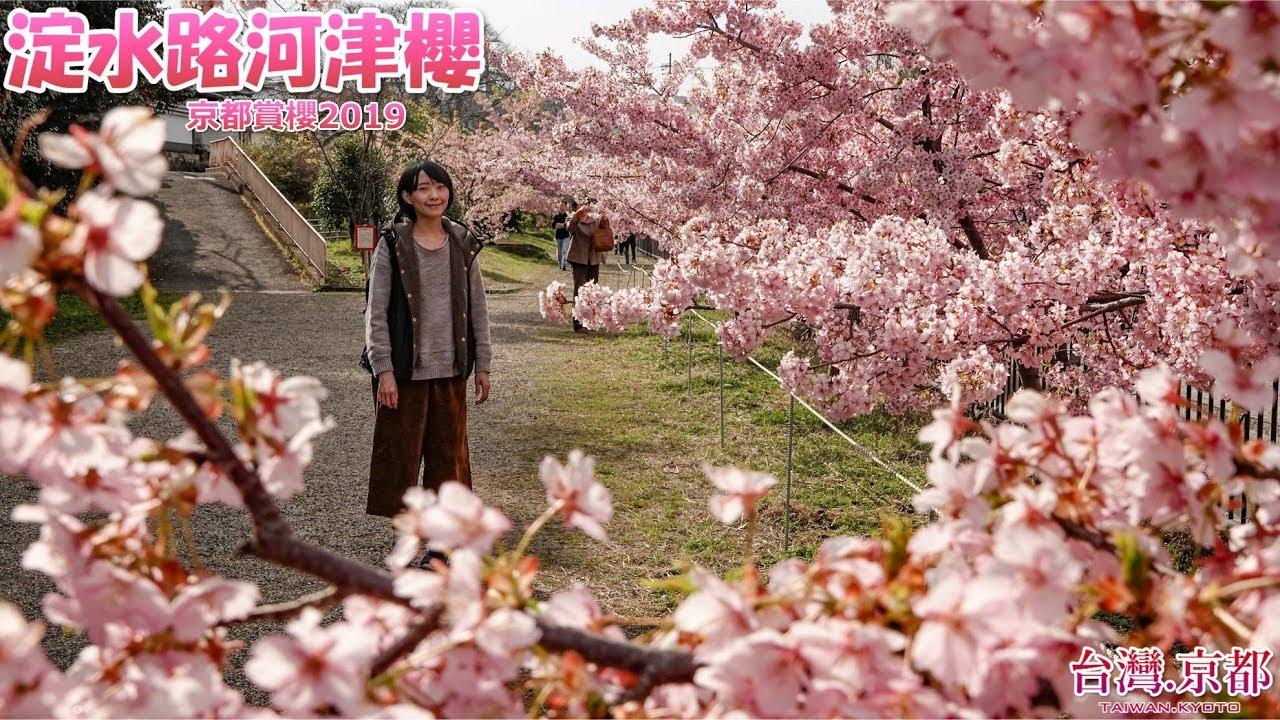 【京都賞櫻】2019 京都・櫻花季系列 京都最早開的櫻花!淀水路 ...
