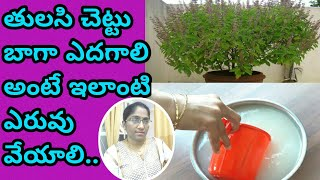 How to grow tulasi plant at home/fertilizer for all plants/fertilizer for tulasi plant/in telugu