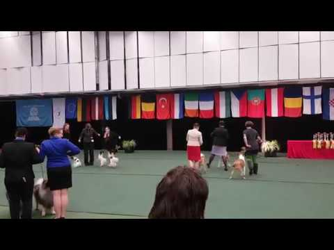 Breeders Group competition IDS Vilnius Cup 2017