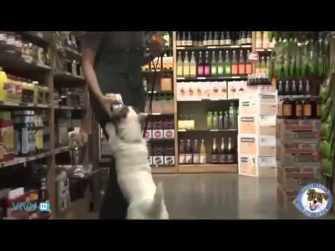 Chú chó thông minh nhất quả đất :v