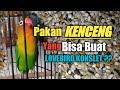 Pakan Pendongkrak Agar Lovebird Jadi Konslet  Mp3 - Mp4 Download