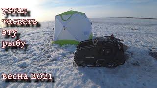 устал таскать эту рыбу Весенний лёд 2021