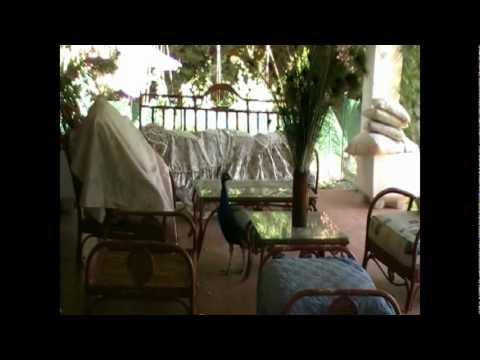 las plumas del pavo sobre la mesa