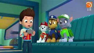 Phim hoạt hình Wans nhóm công tác dịch vụ Quý thứ hai: chim cánh cụt hạnh phúc