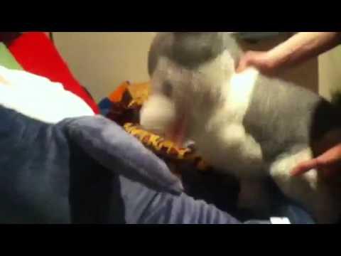 sex porn for dogKaynak: YouTube · Süre: 19 saniye