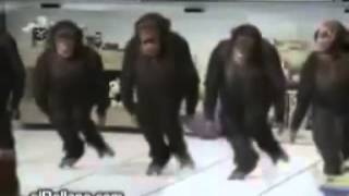 Monkey dance to the Irish jig! funny videos
