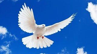 ЦЕРКОВЬ ЭММАНУИЛ ТОМСК 29.03.2015г.(христианские проповеди назидательные и поучительное слово от Господа!пусть в этом прославиться наш Господ..., 2015-03-29T10:27:29.000Z)