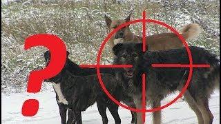 Отстрел бродячих собак. Что говорит Закон