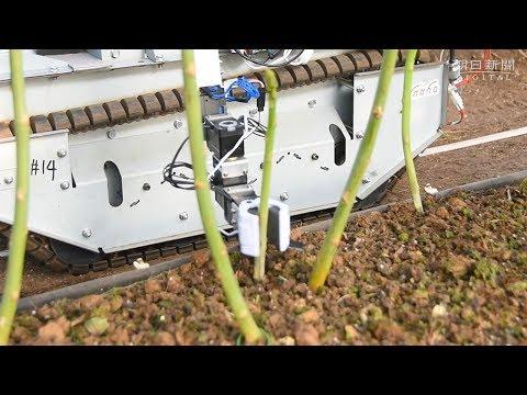 ロボの手にゅっとアスパラ収穫 刈り時もAI判断