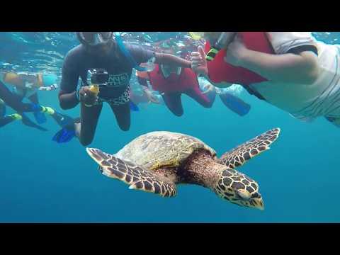 Maldives Snorkelling - Amari Havodda