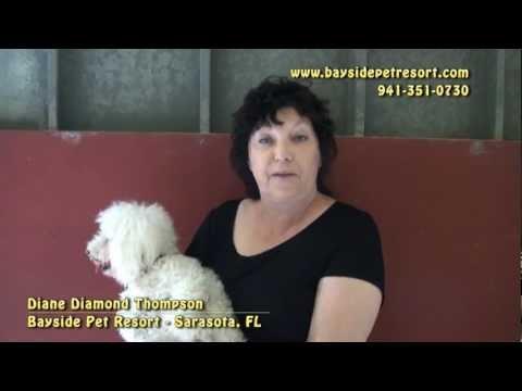 Pet Chamber of Commerce TV - Bayside Pet Resort