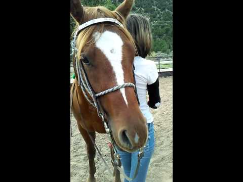 Kelsey Mounting Baby girl Side style. Green broke Quarter horse mare registered for sale 9/23