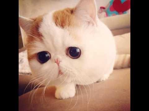 รูปแมวหน้ารักๆ