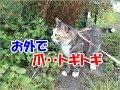 外で爪研ぎする猫-かわいい猫なのに犬として育てられた猫26