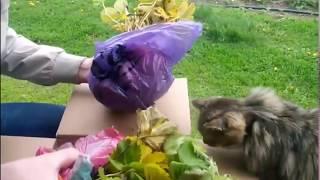 Новые сорта клубники ┃Посылка с рассадой ┃ Выращивание клубники