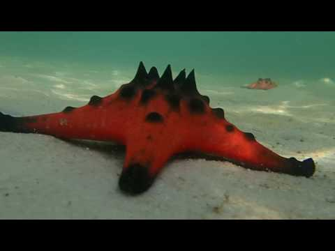 Star Fish Beach Phu Quoc Island - Pssst Secret!