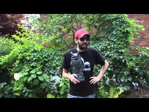 Jay Baruchel: ALS Ice Bucket Challenge