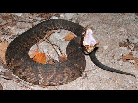 Snakes of Oklahoma