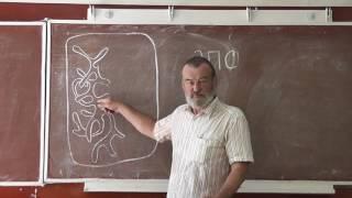 64 Эндоплазматическая сеть