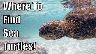 🌊 Hawaii Life- Swimming with Sea Turtles in Hilo  (The Big Island) !