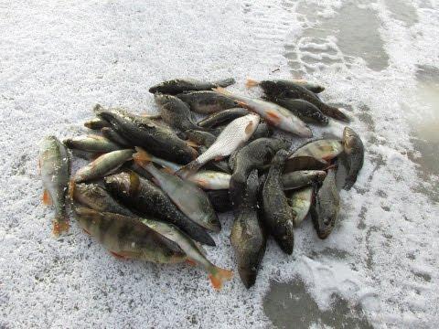 рыбалка крупный ротан видео