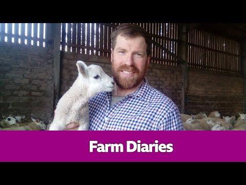 Jim Smith's Farm Diaries - Short Stuff