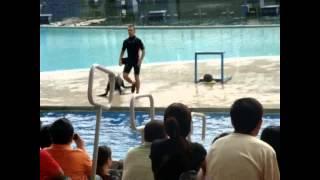 Dolphin Show @ Manila Ocean Park