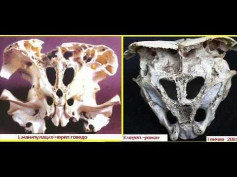 А.Скляров: Сообщение о болгарских черепах