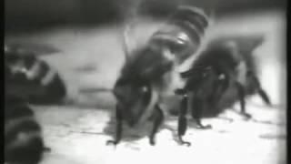 Советское пчеловодство  Павильонное содержание MP4