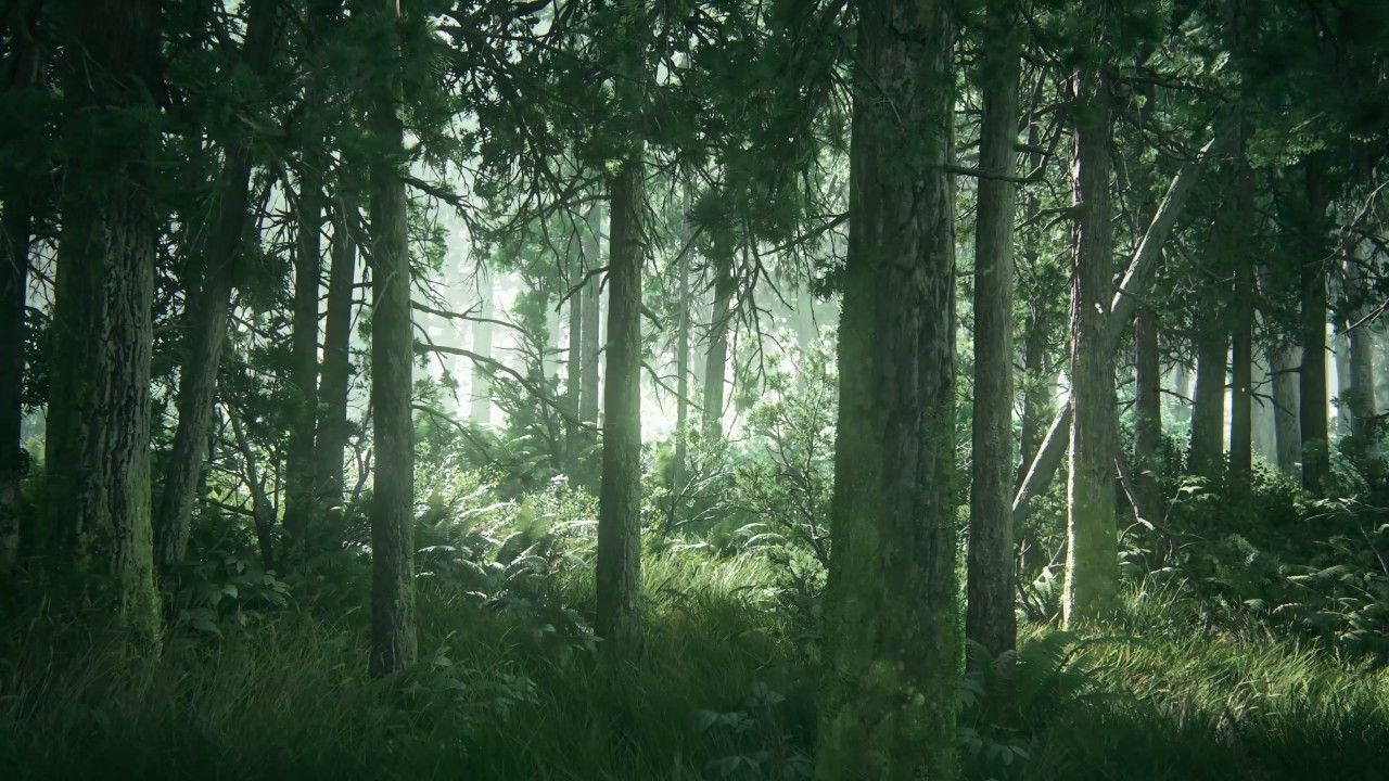 Snow Falling Wallpaper Hd Tlou2 Beautiful Forest Hd Desktop Wallpaper Using