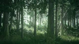 Tlou2 Beautiful Forest Hd Desktop Wallpaper (using Wallpaper Engine W/ Download)