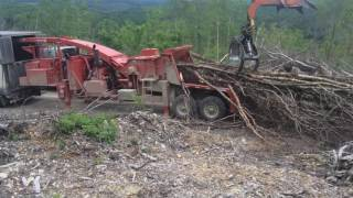 Morbark 40 36  large birch tree tops