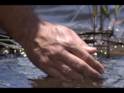Escassez de água no planeta é o tema da Coluna Eco