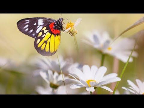 "Beautiful Relaxing music, Spa music, Study music ""Peaceful Nature Walks"" by Tim Janis"