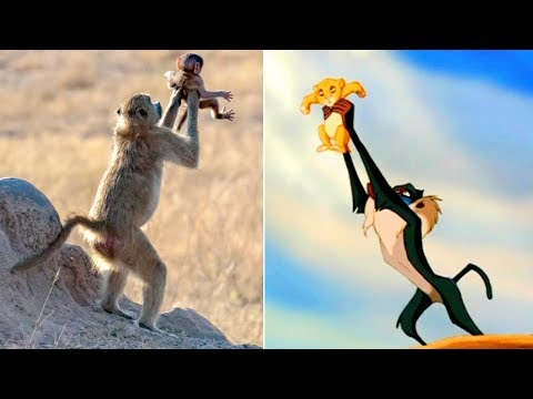 Shelley Wade - Monkey Holds Infant Just Like In Iconic 'Lion King' Scene