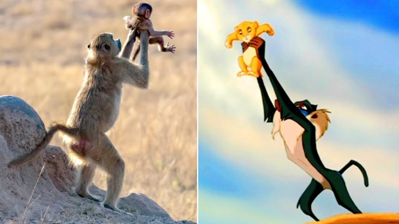 the monkey in lion king