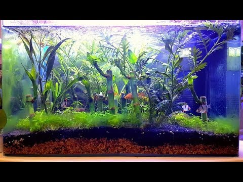 How To Make A Fish Tank With Live Plants And Lucky Bamboo Youtube