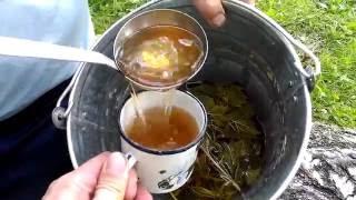 ГОЛОС ЧУВАКА - рецепт лесного таежного чая!