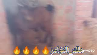مفاطيم قبرصي شبعانين..طنطا..01153553100..01273943511