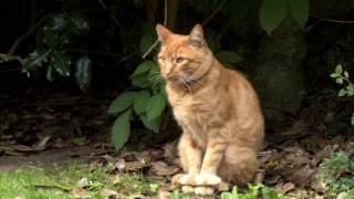 Spanish Cat rescue - STV