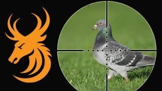 Airgun Hunting - Shooting feral pigeons with a NiteSite NS200 in Scotland