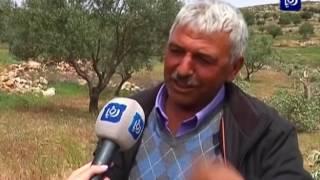 اعتداءات المستوطنين على أراضي قرية المخماس في القدس المحتلة